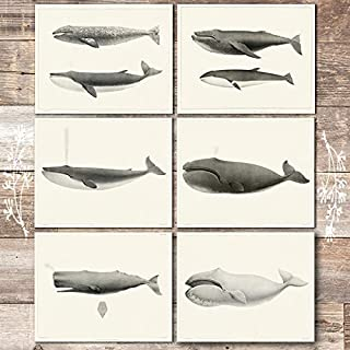 Vintage Whales Wall Art Prints (Set of 6) - Unframed - 8x10s | Beach Decor