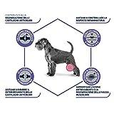 Zoom IMG-1 advance veterinary diets articular senior