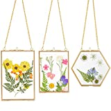 3 Packs Pressed Flowers Glass Frames- Golden Hanging Glass Picture Frames with Chain Floating DIY Artwork Display Frames in 3 Sizes for Dried Plant Specimen Kids Art Photo Display Gallery Wall Decor
