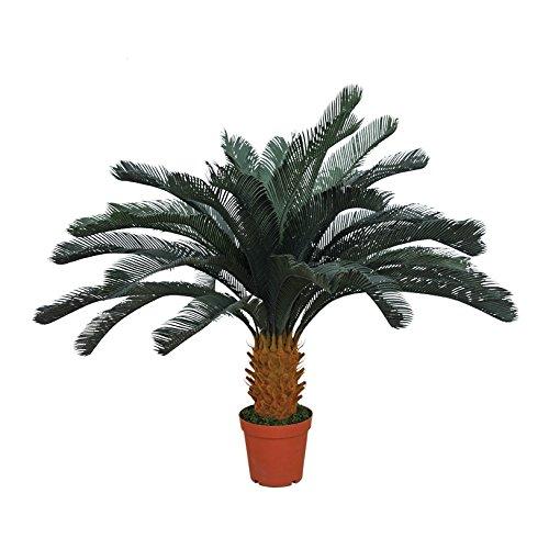 Catral Allemagne Décoration, Plante icca 125 cm, Vert, 135 x 26 x 28 cm, 74010007