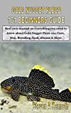 GOLD NUGGET PLECO 101 BEGINNERS GUIDE: Best own manual on everything you need to know about Gold Nugget Pleco 101: Care, Size, Breeding, food, disease & More