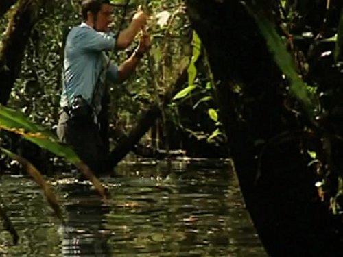 In den Sümpfen der Everglades