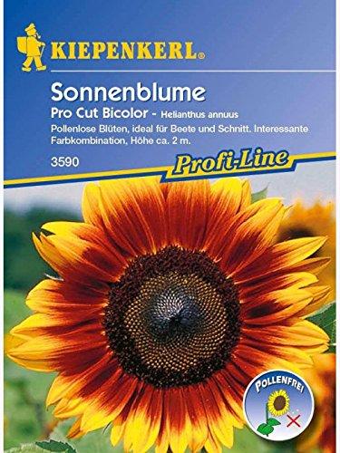 Kiepenkerl Sonnenblumen Gelber