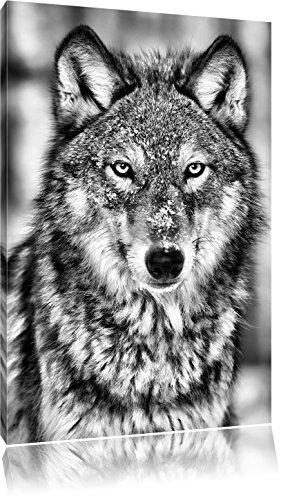 Pixxprint Wachsamer Wolf als Leinwandbild | Größe: 100x70 cm | Wandbild| Kunstdruck | fertig bespannt