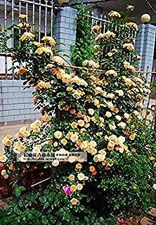 Amazon.es: 10595 - Jardinería: Jardín