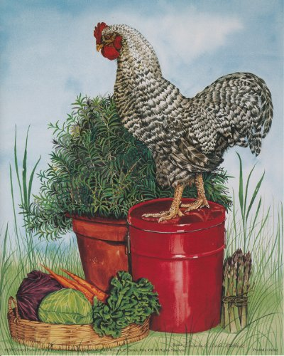 Plymouth Rock, Hühner Wildlife Animal Poster/Kunstdruck (40 x 50)