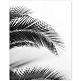 Palm Tree Leaf Wall Prints - Gray Black Minimalist Botanical Photography Art - 11 x 14 Unframed Tropical Leaves Print - Printed on Premium Photographic Paper - Nature Lovers Gift