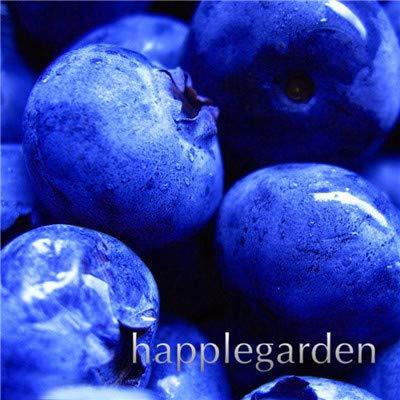 Bloom Green Co. Vente! 100 Pcs/sac bonsaïs aux bleuets comestibles de plantes fruitières Heirloom Bio Nain Blueberry Bonsaï Plante en pot pour jardin: 11