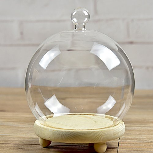Glass Cloche Globe with Wooden Base Dia 5.9 inch
