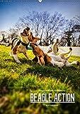 Beagle Action - Wilde Kuscheltiere (Wandkalender 2019 DIN A2 hoch): Beagles beim Spielen (Monatskalender, 14 Seiten )