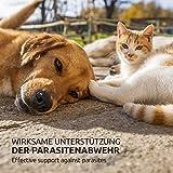 AniForte Milben Stop Spray 100 ml – versch. Größen – Naturprodukt für Hunde, Katzen & Pferde - 7
