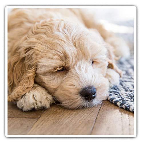 Impresionantes pegatinas cuadradas (juego de 2) 10 cm – color crema labradoodle cachorro durmiendo perro divertido calcomanías para portátiles, tabletas, equipaje, reserva de chatarras, neveras, regalo fresco #44740