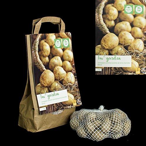 Inter Flower - 1kg Kartoffeln BINTJE - mehlig - in Geschenkverpackung - jetzt einpflanzen! selber...
