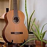 Immagine 1 cordoba c3m chitarra classica in