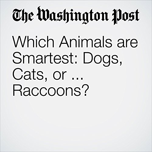 Which Animals are Smartest: Dogs, Cats, or ... Raccoons? copertina
