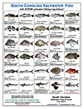 South Carolina Saltwater Fish Identification Card Set - Three Waterproof Cards Showing 60 Common Fish and 17 Sharks in True-to-Life Photographs with Current SCDNR Rules and Additional Information.