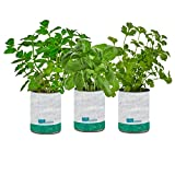 Back to the Roots New Kitchen Garden Complete Herb Kit Variety Pack of...