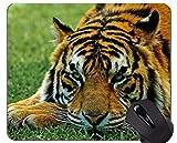 Yanteng Alfombrillas de ratón Tiglon White Tiger Wildcat Zoo Animals, Alfombrilla de ratón Tiger Rubber