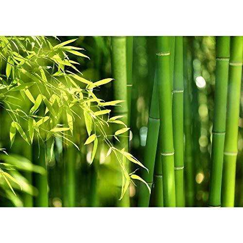 Fototapete Wald - ALLE WALDMOTIVE auf einen Blick ! Vlies PREMIUM PLUS - 350x245 cm - FAR ASIA BAMBOO - Bambus Bambuswald Dschungel Asia Asien Grün Bambusweg - no. 018