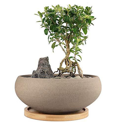 MUZHI Bonsai-Topf aus Keramik, rund, unglasiert, mit Bambus-Tablett, groß, grobe Keramik, Sukkulenten-Übertopf mit Ablaufloch, 20,3 cm