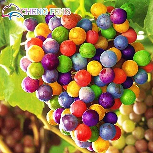 HONIC 50pcs sehr seltene Goldfinger Weinrebe Pflanzen Erweiterte Bonsai Natur Wachstum Grape Köstliches Pflanzen für Haus Garten: Grün