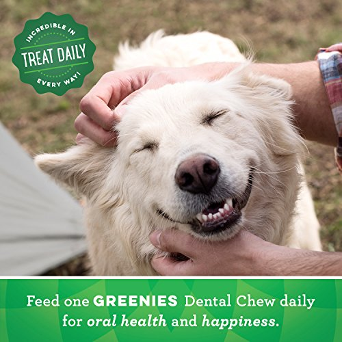 Greenies Dog Dental Chews Treats