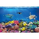 GREAT ART Fototapete – Aquarium – Wandbild Dekoration