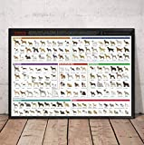 Wall Art Picture Canvas Print Poster Razas de Perros El Diagrama de Dog Art Canvas Poster Pictures para la decoración de la Sala de Estar 60 * 90Cm sin Marco