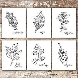 Kitchen Herbs Black & White Art Prints - Botanical Prints - (Set of 6) - Unframed - 8x10s