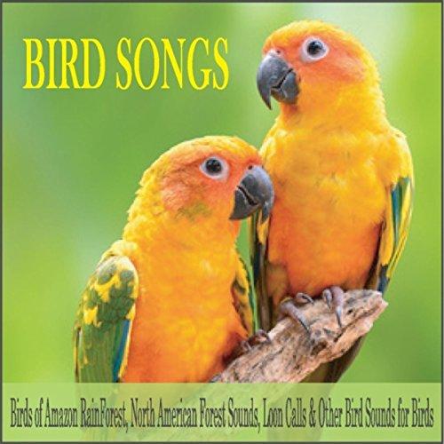 Music of the Amazon