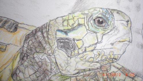 Eine Grieschiche Landschildkröte step by step mit Buntstiften (Zeichenprojekte 1)