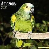 Amazon Parrot Calendar - Parrot Calendar - Calendars 2020 - 2021 Calendars - Bird Calendars - Monthly Wall Calendar by Avonside