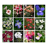 10 Hanging Basket Summer Plug Plants, Ideal Mix of Plug Plants for Garden Hanging Baskets. * Ready to Plant up * from Newlands