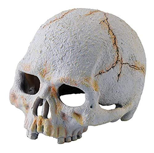 EXO TERRA Exoterra Primate Skull Décoration pour Reptile/Amphibien Taille S