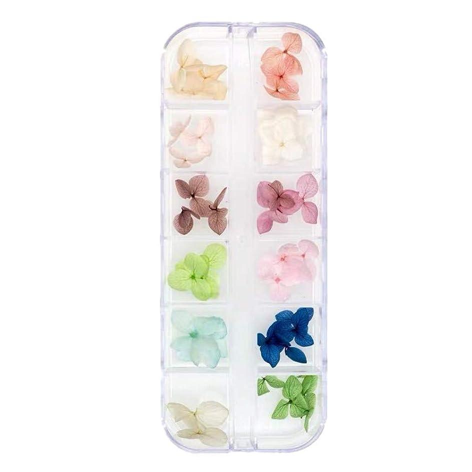 れる年ライドKingsie ドライフラワー ネイル 本物の押し花 紫陽花 ネイルパーツ 12色 ネイルアート アクセサリー ジェルネイルに埋め込み レジン封入 (2A)