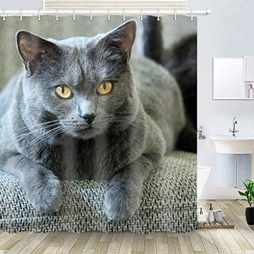 OiArt Shower Curtain, Polyester Fabric Waterproof Hooks Included-72x72 inches- Chartreux Cat Animals Pet Mieze 3