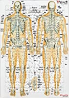 解剖学ジグソーパズル 全身の骨