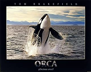 Breaching Orca Killer Whale Ocean Animal Nature Wall Decor Art Print Poster (16x20)