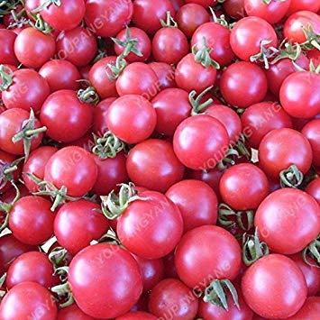 VISTARIC 10 Stück Luffa cylindrica, Luffa, Winkel Handtuch Kürbis Samen, lange Luffa Samen, Gemüsesamen für Hauspflanzen