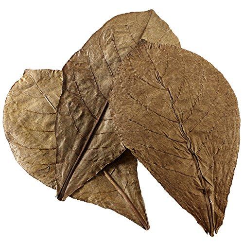 Hobby Catappa Leaves 51105 Lot de 12 Feuilles XL