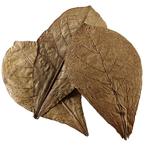 Hobby Catappa Leaves 51105 Lot de 12 Feuilles XL