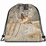 Barcelona Spain Barbary Sheep Only Wild Animals Wildlife Animal Drawstring Backpack Bag for Kids Boys Girls Teens Birthday Gift String Bag Gym Cinch Bag for School and Party