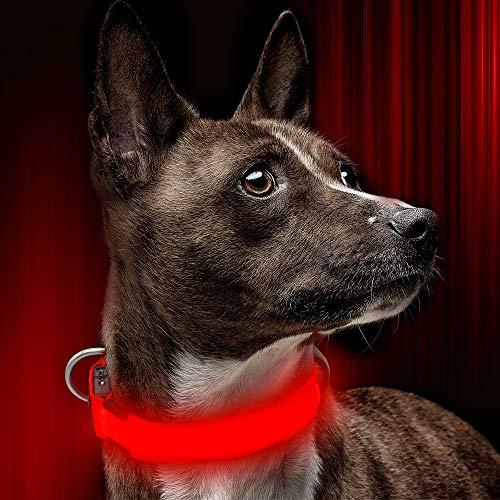 BSEEN LED-Hundehalsband, USB-aufladbar, leuchtende Hundehalsband, Gute Sichtbarkeit und verbesserte Sicherheit für Ihre Hunde, S, rot