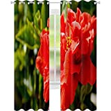 YUAZHOQI Cortinas de hibisco rojo flor china rosa Gudhal Chaba zapato flor en un jardín tropical de Tenerife Isla Canaria 132 x 241 cm cortina de reducción de ruido
