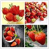 100 Semillas De Fresa Semillas De Fresas Trepadoras De Frutas Y Verduras Aromáticas Dulces Para La Plantación De Jardines Al Aire Libre Las Variedades Favoritas De Los Jardineros