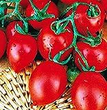 Semillas de tomate de matraz pequeño - verduras - lycopersicum esculenthum - aproximadamente 700 semillas - las mejores semillas de plantas - flores - frutas raras - tomates de matraz pequeños