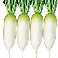 国華園 種 野菜たね ダイコン F1ジューシースティック 1袋(5ml)/メール便配送 21年春商品