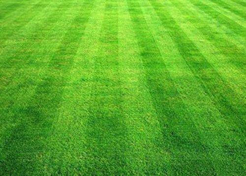 200pcs/sac Gazons Graines de golf de catégorie spéciale Evergreen Lawn Terrains de soccer cour ornement plante pour le bricolage jardin