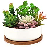 Macetero moderno de cerámica Innoter para suculentas o cactus, color blanco, con bandeja de bambú,...