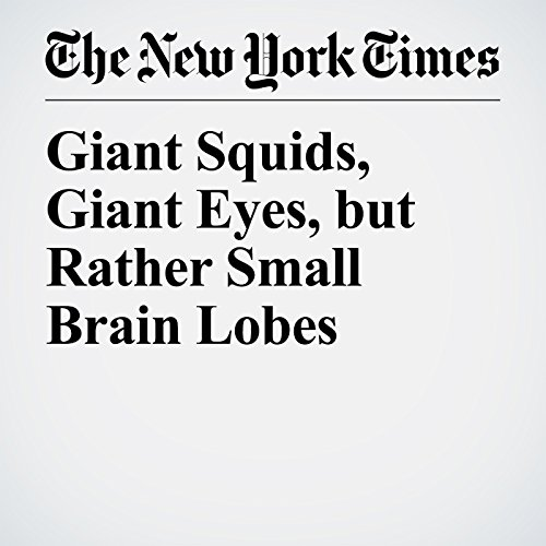 Giant Squids, Giant Eyes, but Rather Small Brain Lobes copertina